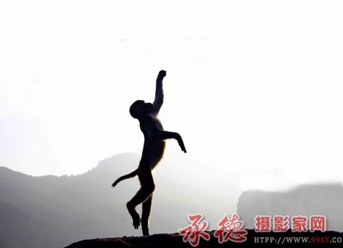 21猴芭蕾
