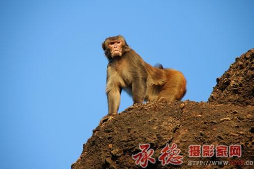 26龙骧虎视大猴王