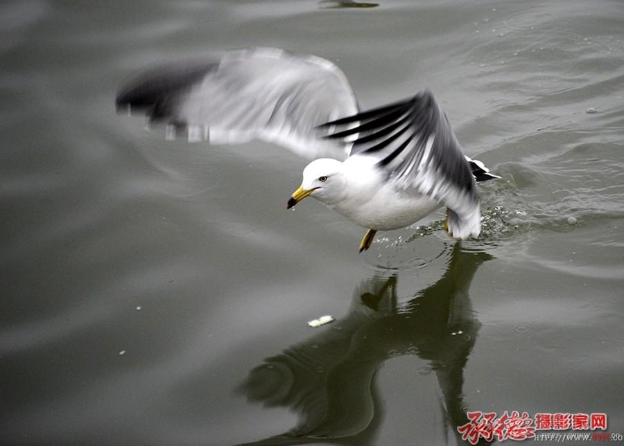 海鸥--海阔天空