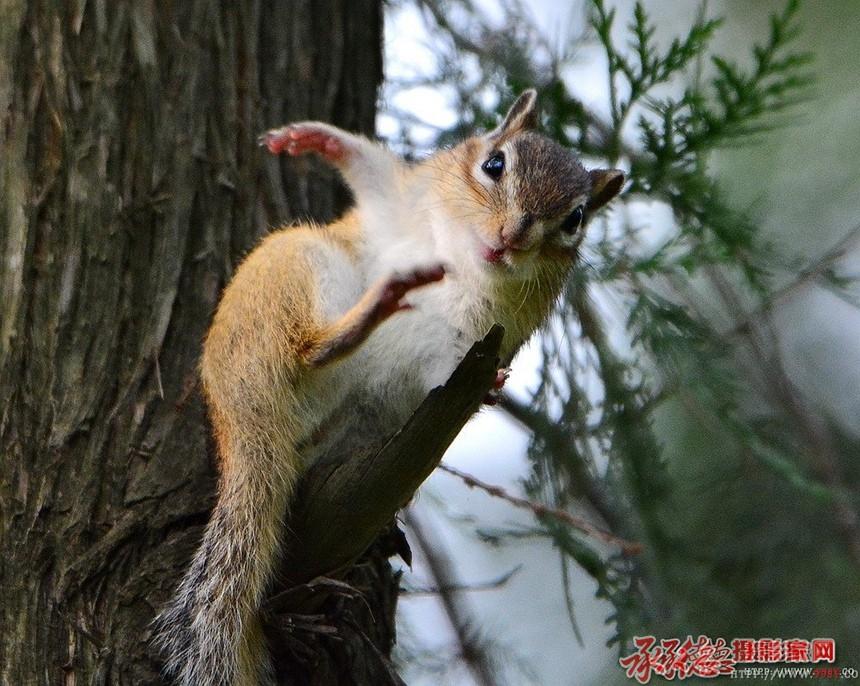 可爱的小松鼠——木子克