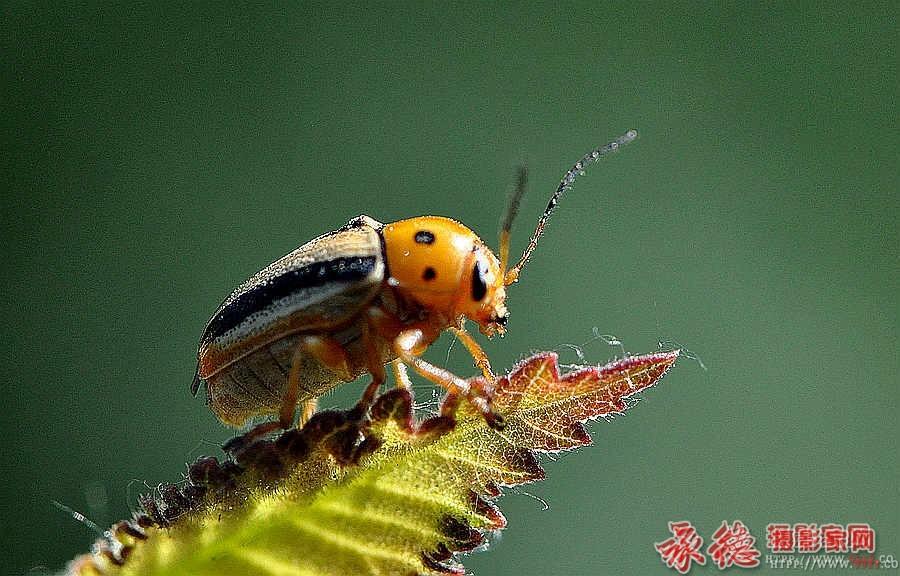 昆虫—风调雨顺