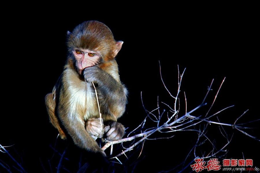小猴--明明亮亮
