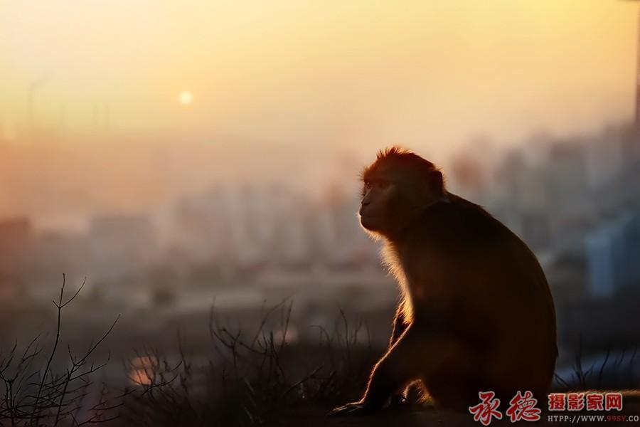 (29)猴年遐想