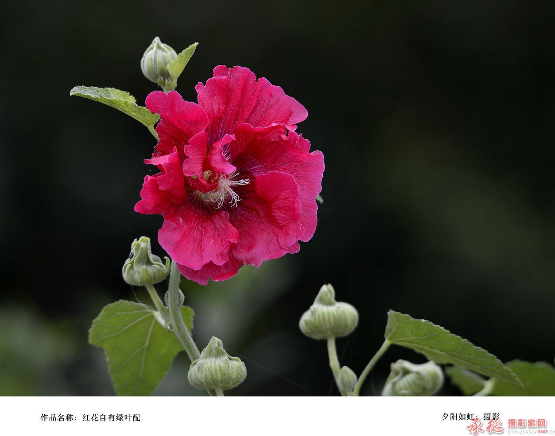 红花自有绿叶配