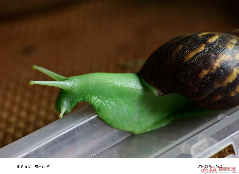 蜗牛行动6