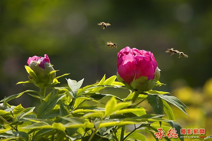 优秀奖:蜂逐花影 交响乐