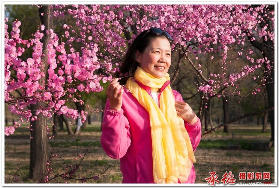 优秀奖:榆叶梅开赏花来 自然而然