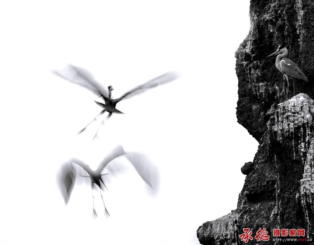 苍鹭情——作者:学图工