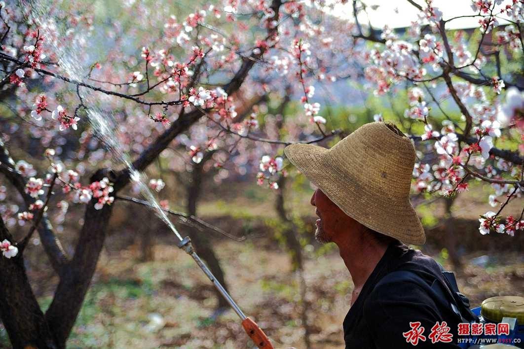 春——作者:yuese333