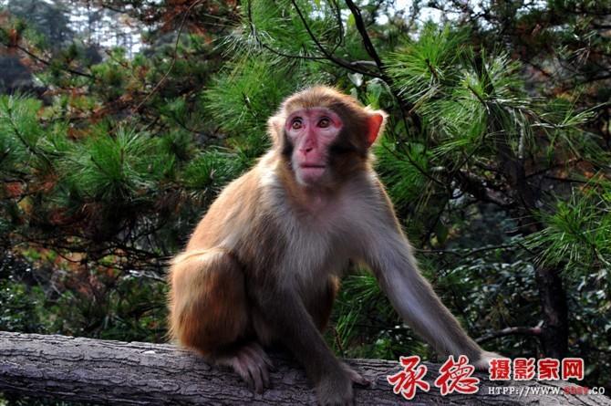 猴——作者:yuese333