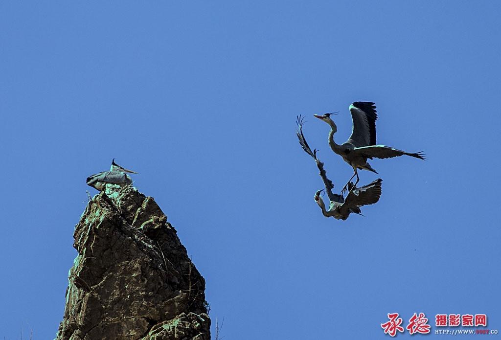 空中芭蕾 (2)——作者:学图工