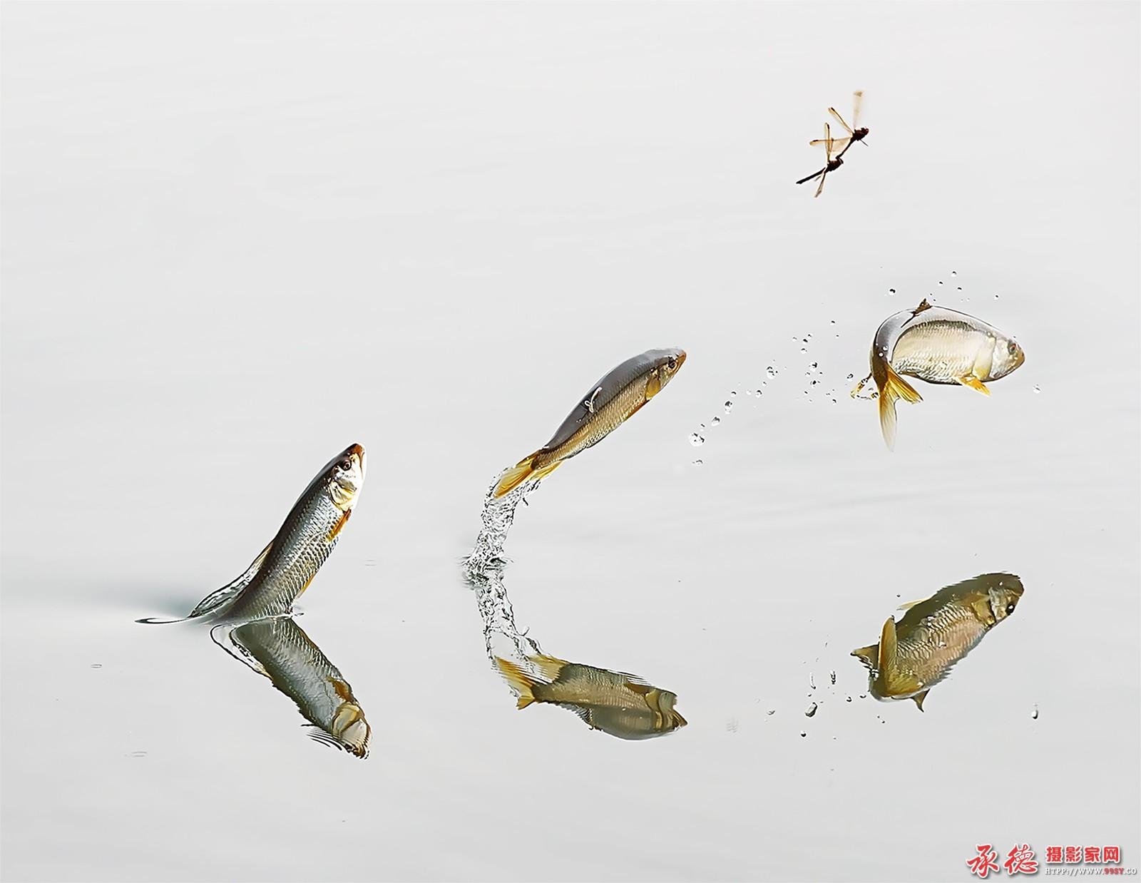 鱼戏蜻蜓——作者:学图工