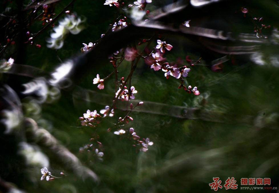 1.春讯-菲林影像