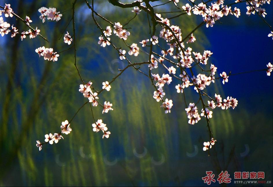 3.春梦-菲林影像