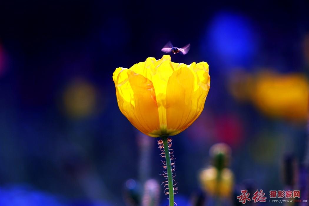 6.花卉-梦里飞翔