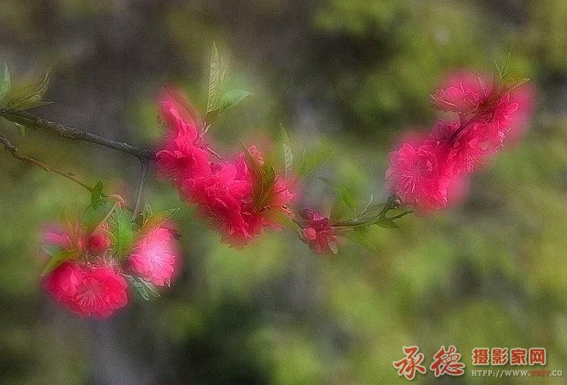 12.花卉二次曝光-豆娘