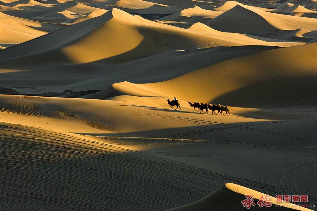 62.沙漠之舟-塞翁失足