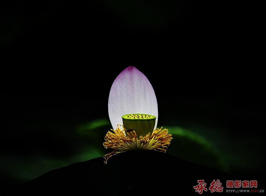 18.荷花灯-海阔天空