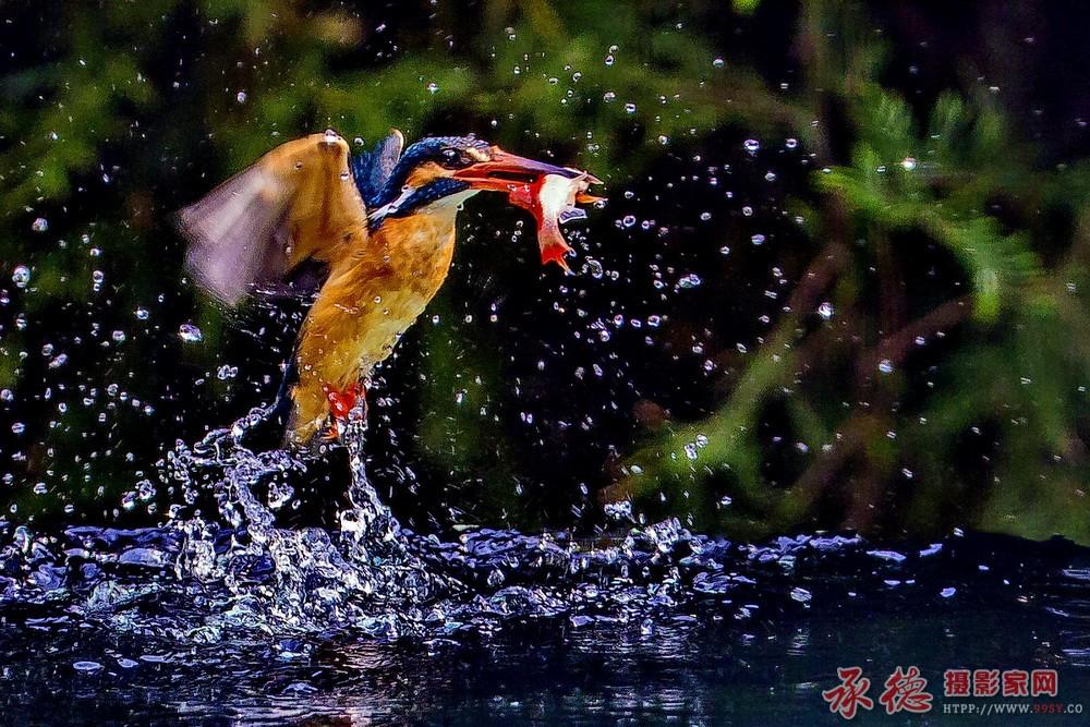 2.蛟龙出水-无拘无束