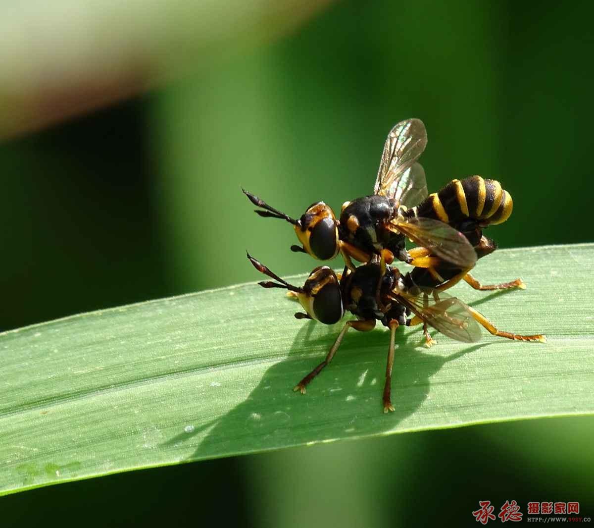 7.蚂蜂的春宫图-雪国