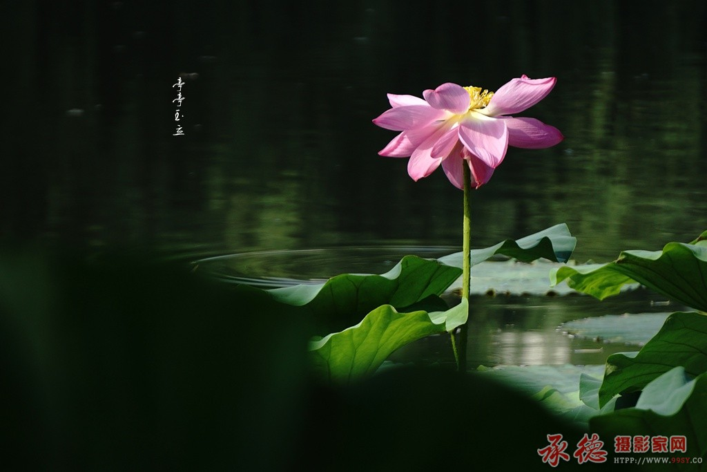 11.亭亭玉立-风调雨顺