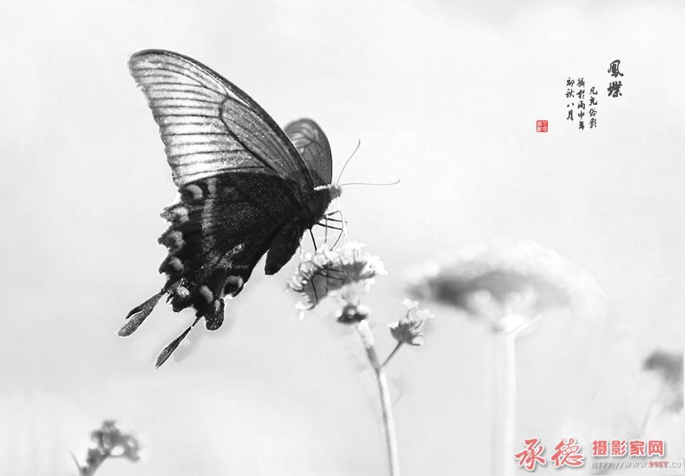 21.凤蝶-凡光俗影