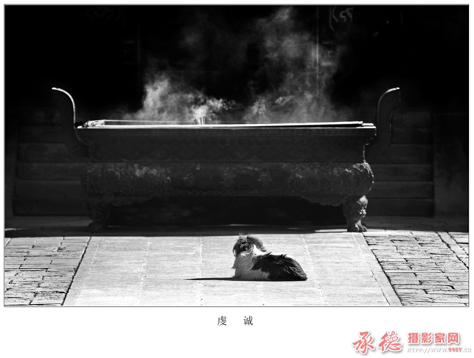 13、《狗运难测》组照 (龙飞)