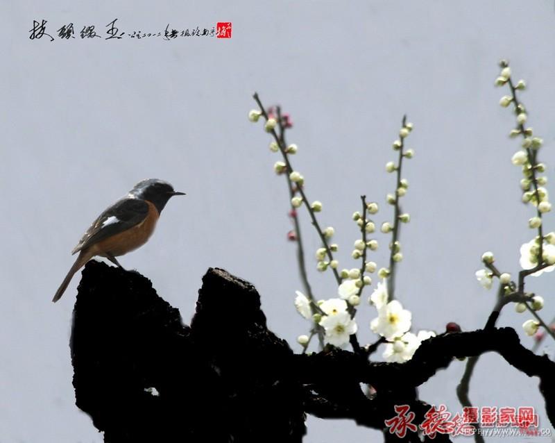 57-枝头鸣春-戴翔