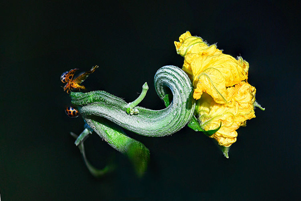 50-花与虫