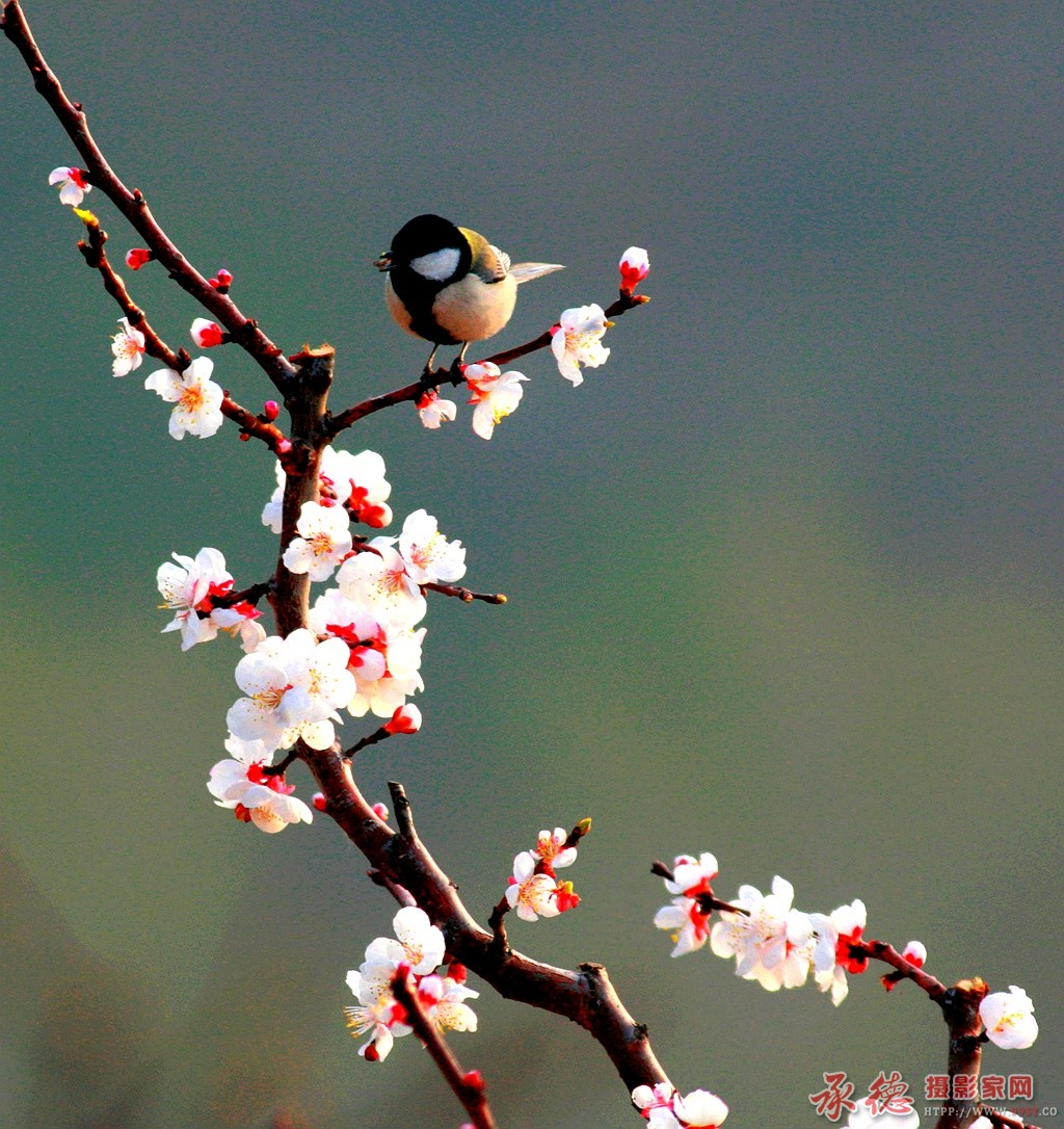 优秀奖-鸟语花香-金佩杰