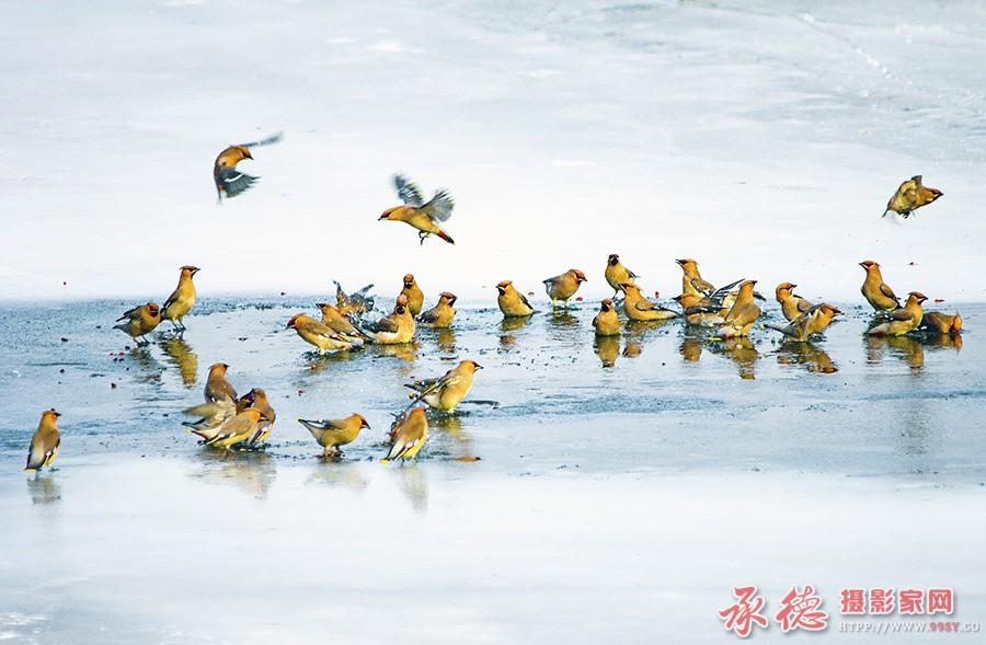 优秀奖-太平鸟-商殿军