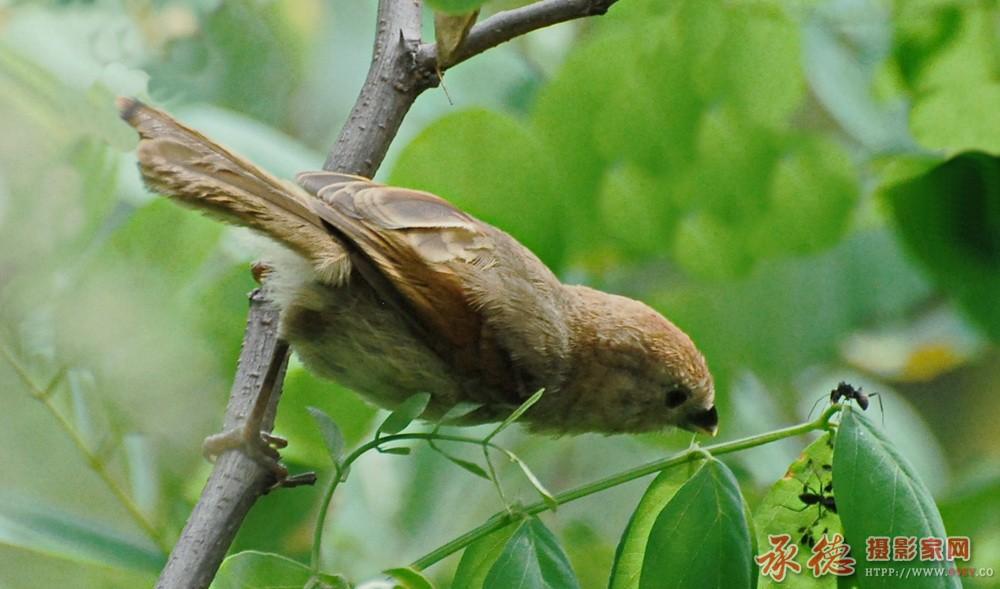优秀奖-小鸟与蚂蚁-郝树森