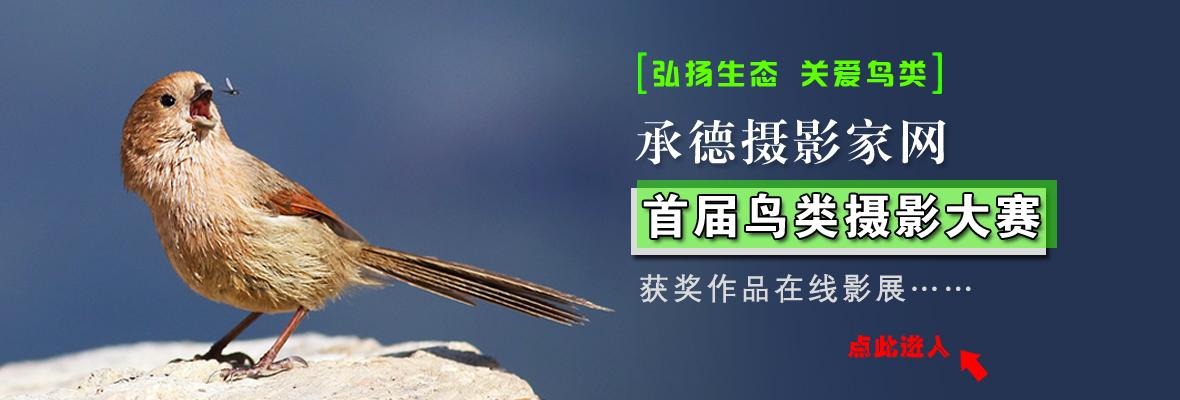 """承德摄影家网""""首届鸟类摄影大赛""""在线公示"""