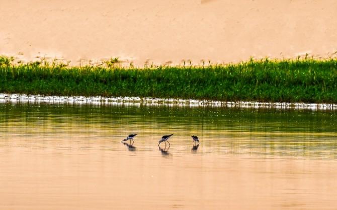 20号 《沙漠稀鸟》.jpg