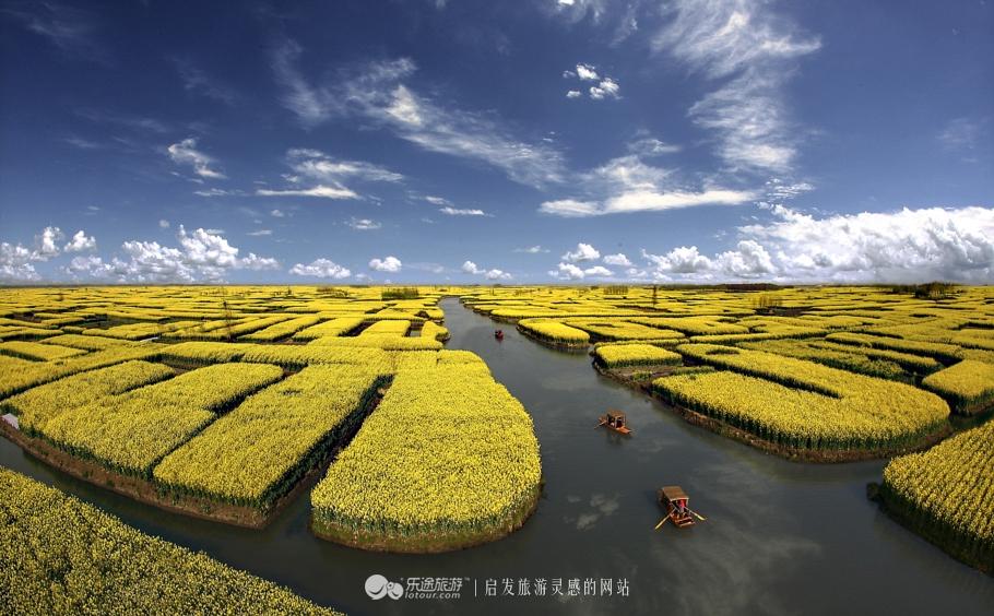 《花的乐章》刘燕摄于兴化千垛风景区
