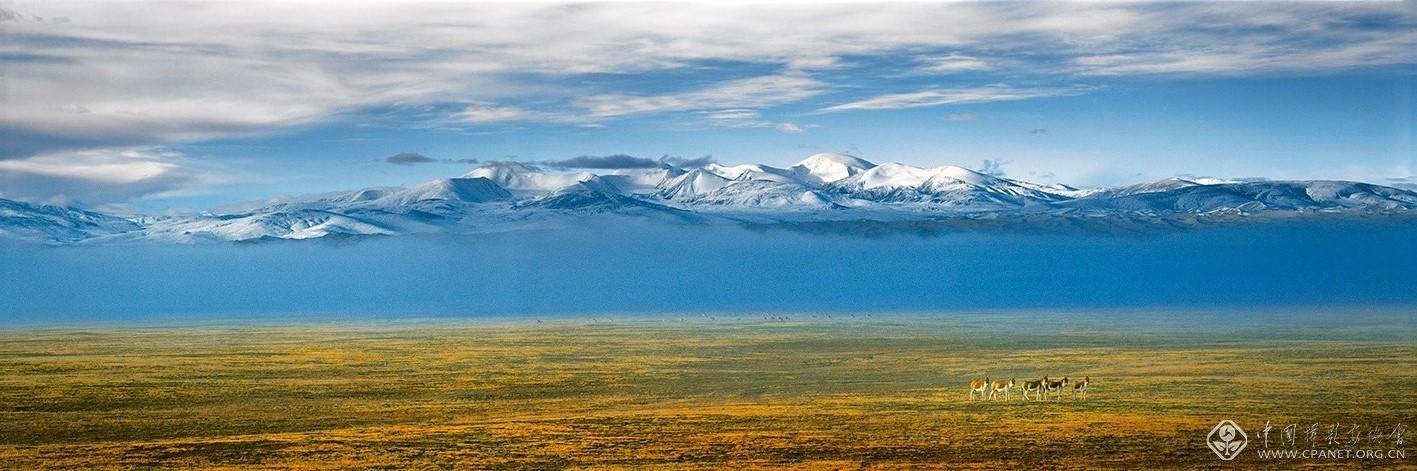 阿尔金高原藏野驴--摄影:潘新华.jpg